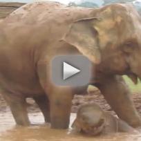 Baby Elephant Video