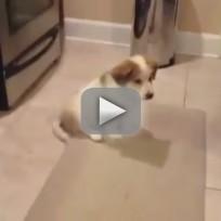 Puppy Tries to Catch Bone