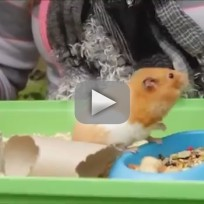 Hamster Rises from the Dead: Explained