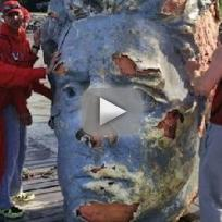 Giant Head Floating in Hudson River