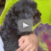 Long Lost Dog Reunites with Owners