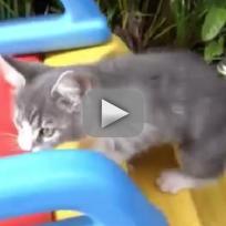 Kittens on Slides