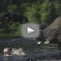 Orphaned Elephant Plays with Dog