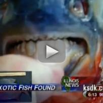 Testicle-Eating Pacu Fish in New Jersey