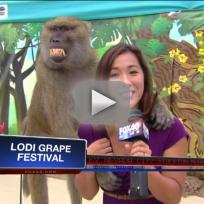 Baboon Fondles Reporter
