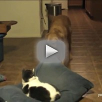 Cats Steal Beds, Dogs Get Pissed