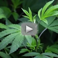 Portland, Maine, Legalizes Marijuana