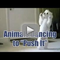 Animals Dance to Salt-n-Pepa