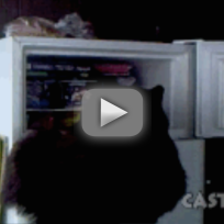 Bear Searches Freezer for a Snack