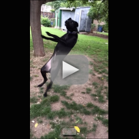 Dog Fails to Catch Tennis Ball: Slow Motion Fun!