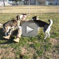 Huskies Greet Returning Soldier