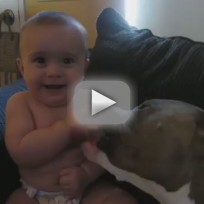 Baby Gets Tongue Bath from Pit Bull