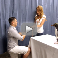 Man-proposes-with-a-penguin