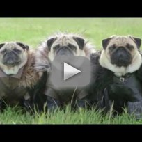 The pugs of westeros how was it made