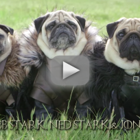 Meet the pugs of westeros