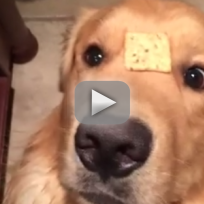 Dog Gets Confused by Cracker