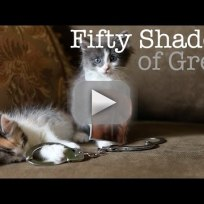 Fifty-shades-of-grey-trailer-cute-kitten-edition