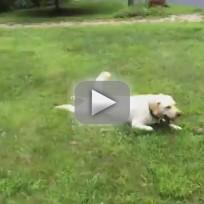 Dog Puts on Unusual Brakes