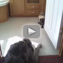 Cat Attempts to Sneak Past Grant Dane