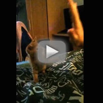 Kitten-high-five-fail