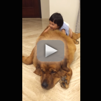 Small-girl-loves-enormous-dog