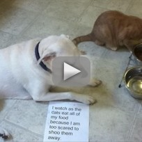 Cats Steal Dog Food