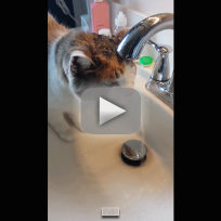Cat Places Head Under Faucet to Drink