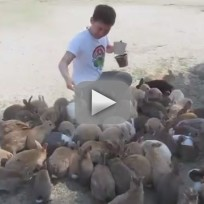Japanese Bunnies Go on the Snuggle Attack