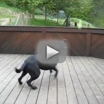 Dog-receives-best-birthday-present-ever