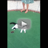 Cat-interrupts-game-of-mini-golf