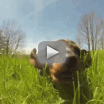 Puppies sprint through grass are so happy