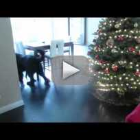 Dog plays hide and seek with little girl