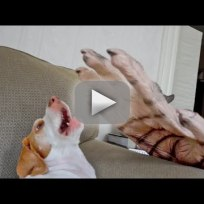 Dog Fights Off Fake Zombie