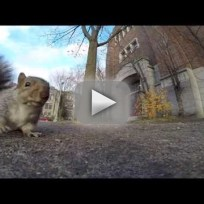 Squirrel steals gopro drops it from tree