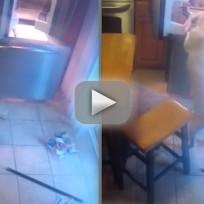 Yellow lab caught raiding fridge
