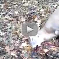 Deer scares the crap out of hunter