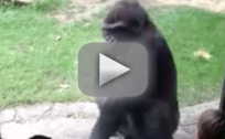 Gorilla Scares Kids at Zoo