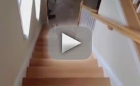 Dog Walks Up Stairs Backward