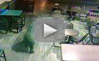Bear Walks Into Colorado Bar