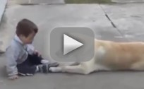 Dog Befriends Boy With Down Syndrome
