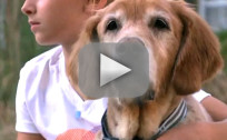 Family Reunites with Golden Retriever