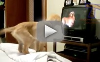 Pets Watch TV, Make Us Laugh