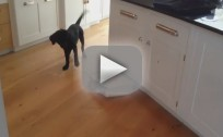Cat Scares the Ish Out of a Puppy