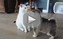 Puppies Introduce Themselves to Kitten