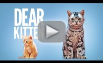 Dear Kitten Friskies Commercial