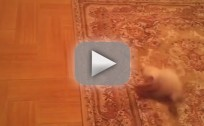 Cat Freaks Out Over Carpet