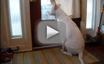 Dog Waits for Owner to Arrive Home