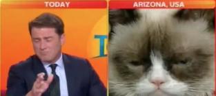 Grumpy cat tv interview