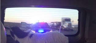 Jose canseco goat pulled over by cops