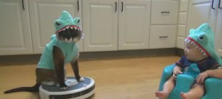 Shark Cat Rides Roomba, Hangs Out with Shark Baby